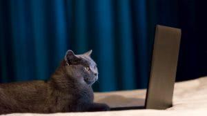 kotek przy laptopie